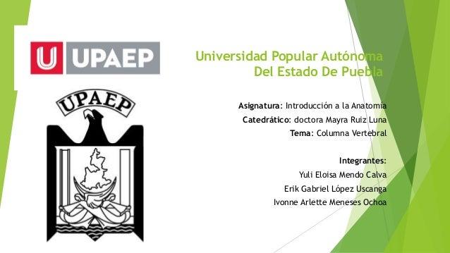 Universidad Popular Autónoma  Del Estado De Puebla  Asignatura: Introducción a la Anatomía  Catedrático: doctora Mayra Rui...