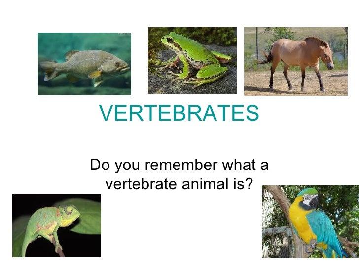 VERTEBRATESDo you remember what a vertebrate animal is?