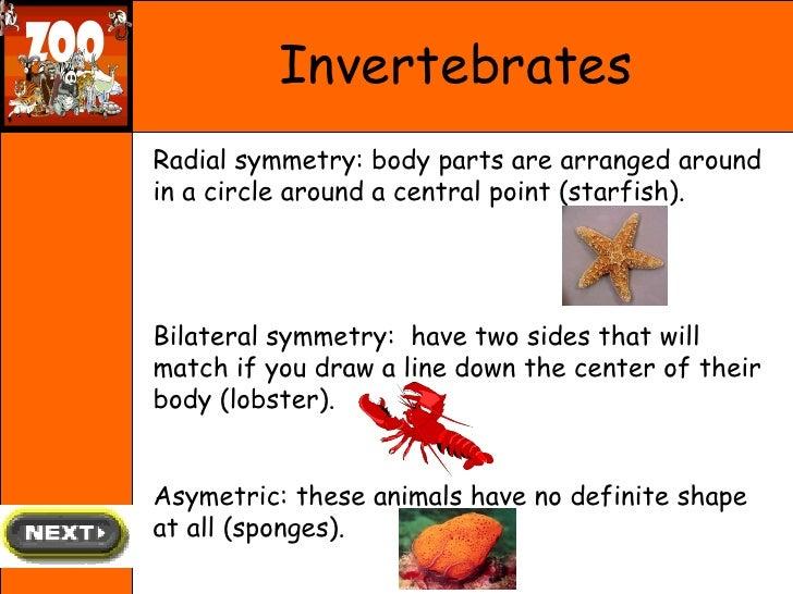Arthropods worksheet