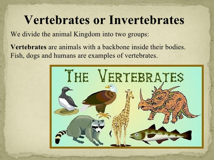 vertebrates and invertebrates An educational video for kids video montage of the main subdivisions of animals at end of pictures is a video of an octopus eating sharks includes music in the picture montage, but it doesn't really go with the theme grades 4-8 4:56 min.