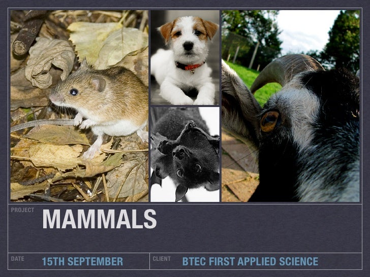MAMMALS PROJECT     DATE                       CLIENT           15TH SEPTEMBER            BTEC FIRST APPLIED SCIENCE