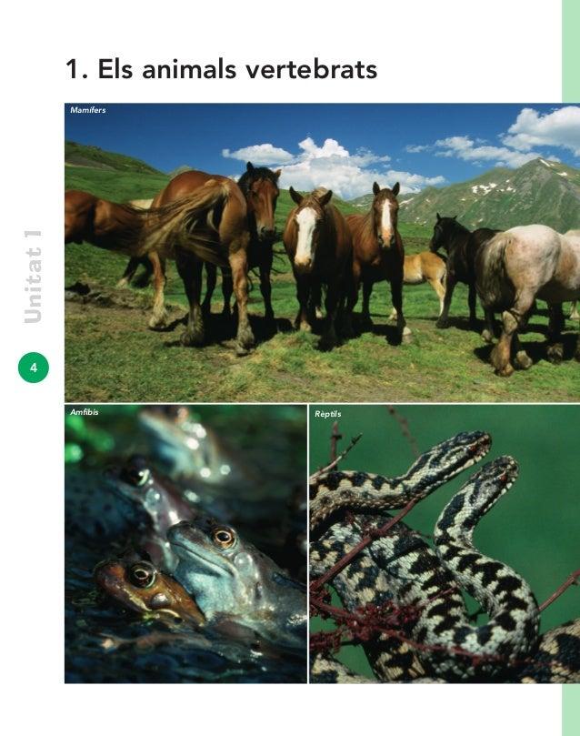 4 Unitat1 Amfibis Rèptils 1. Els animals vertebrats Mamífers