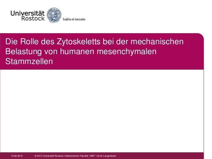 Die Rolle des Zytoskeletts bei der mechanischenBelastung von humanen mesenchymalenStammzellen 19.02.2012   © 2012 Universi...