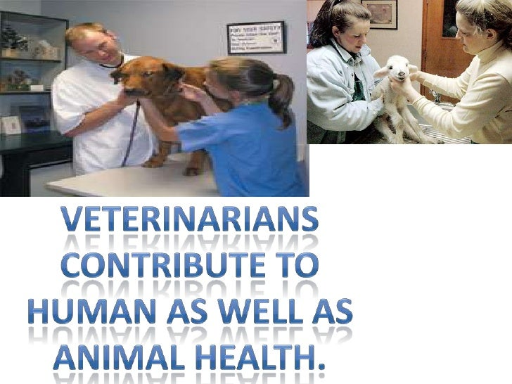 Veterinarians contribute to human as well as animal health.<br />