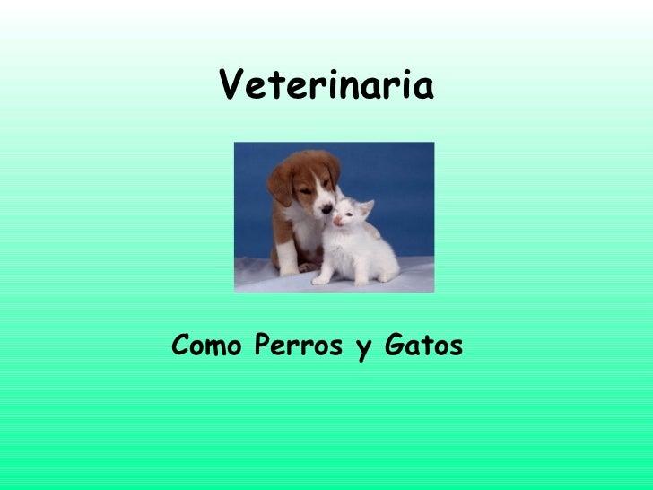 Veterinaria Como Perros y Gatos