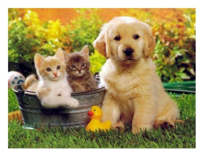 Fatih Acil Veteriner //0537 578 55 69\\ Fatih 7/24 Acil Veteriner Kliniği – Fatih Nöbetçi Veteriner – Fatih Acil Kedi Veterineri – Fatih  Acil Köpek Veterineri