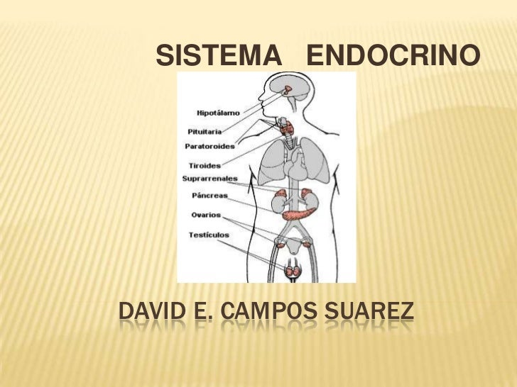 SISTEMA ENDOCRINODAVID E. CAMPOS SUAREZ