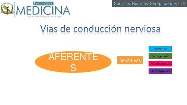 González González Georgina Gpe. III-5  Tacto fino  AFERENTE S  Sensitivas  Tacto grueso Propioceptiva Termoalgèsica