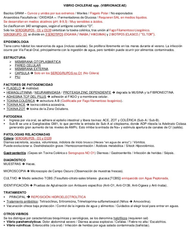 VIBRIO CHOLERAE spp. (VIBRIONACEAE) Bacilos GRAM – Curvos y unidos por sus extremos / Moviles / Flagelo Polar / No esporul...