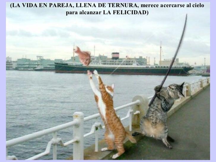 Les meilleures photos de L'année 2005 D'après NBC (LA VIDA EN PAREJA, LLENA DE TERNURA, merece acercarse al cielo para alc...