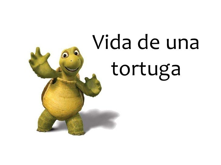 Vida tortuga