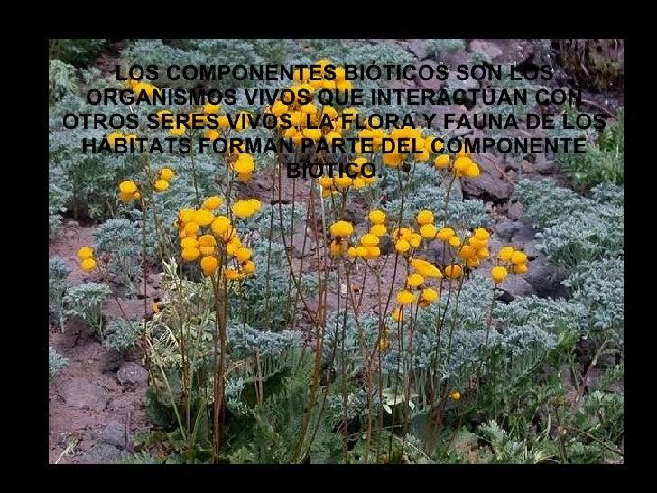 LOS COMPONENTES BIÓTICOS SON LOS ORGANISMOS VIVOS QUE INTERACTÚAN CON OTROS SERES VIVOS. LA FLORA Y FAUNA DE LOS HÁBITATS ...