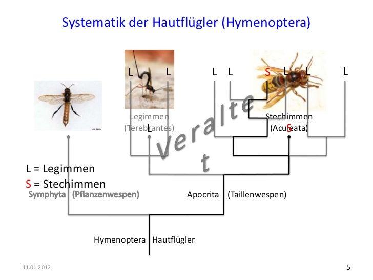 vielfalt der stechimmen ameisen bienen wespen in der. Black Bedroom Furniture Sets. Home Design Ideas