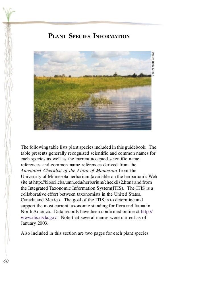 Minnesota: Plants for Stormwater Design - Part 2