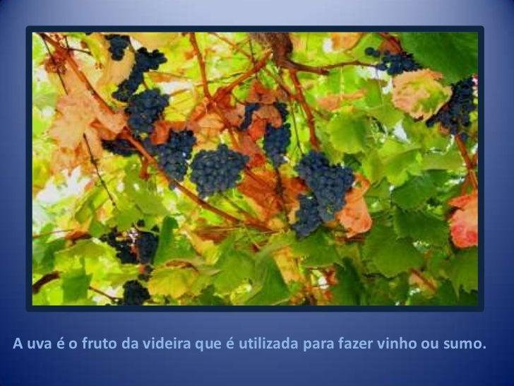 As Vindimas<br />Cristiana Bernardo<br />                                                                 5ºC        Nº7  ...