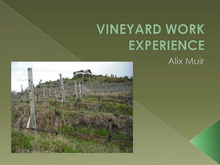 VINEYARD WORK EXPERIENCE<br />Alix Muir<br />