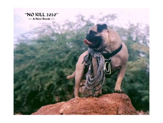 Vinny the pug final slideshow