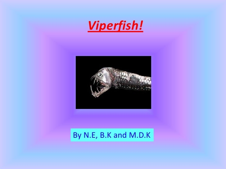 Viperfish!By N.E, B.K and M.D.K