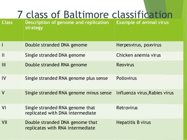 classification of virus and basic terms