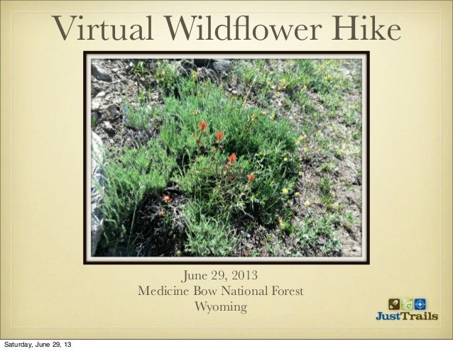TextText Virtual Wildflower Hike June 29, 2013 Medicine Bow National Forest Wyoming Saturday, June 29, 13