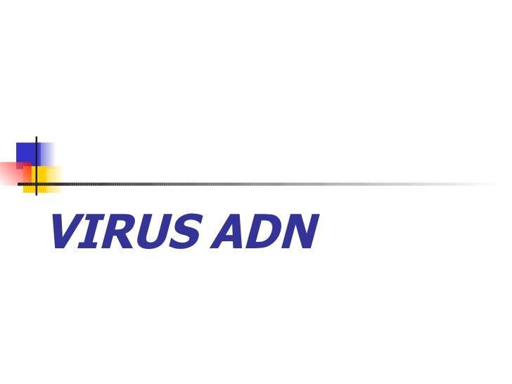 Virus Adn 1