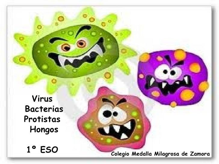 VirusBacteriasProtistas Hongos1º ESO      Colegio Medalla Milagrosa de Zamora