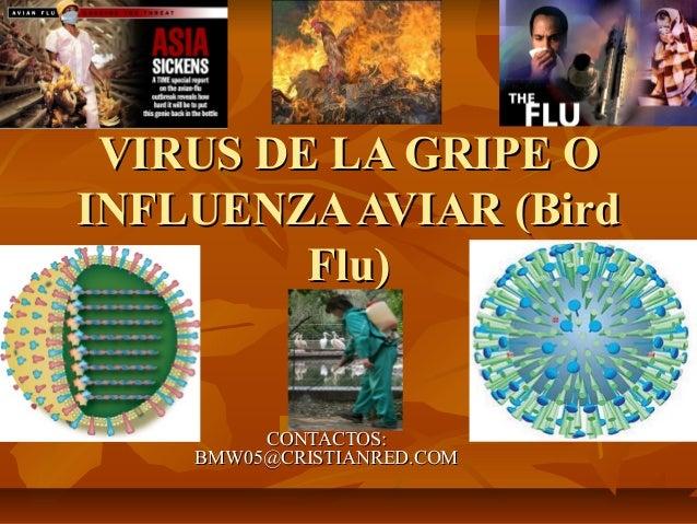 VIRUS DE LA GRIPE OINFLUENZA AVIAR (Bird         Flu)         CONTACTOS:    BMW05@CRISTIANRED.COM