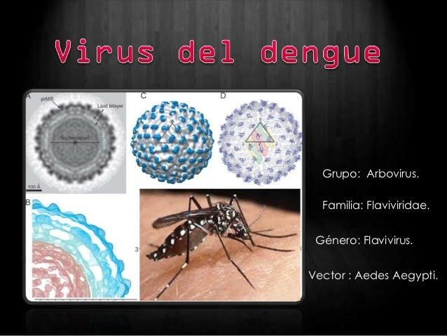 Grupo: Arbovirus.  Familia: Flaviviridae. Género: Flavivirus.Vector : Aedes Aegypti.