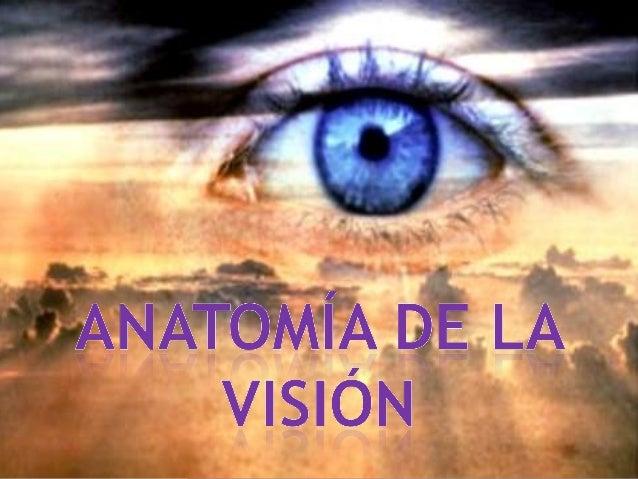 OJO: Órgano que capta las sensaciones luminosas y los colores. El diámetro del ojo es de unos 24 mm. y pesa 7.5 grs Tiene...