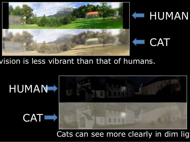 If Cats Can See In The Dark