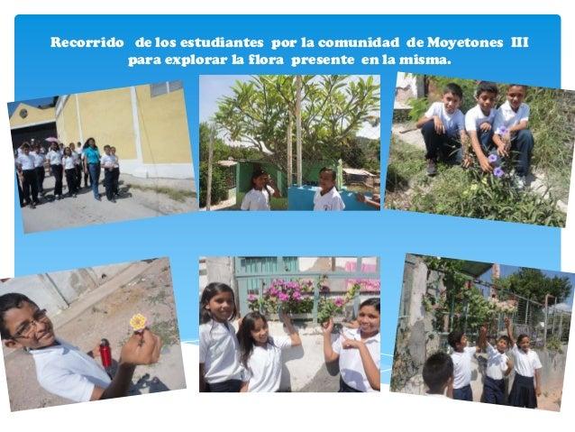 Recorrido de los estudiantes por la comunidad de Moyetones III         para explorar la flora presente en la misma.