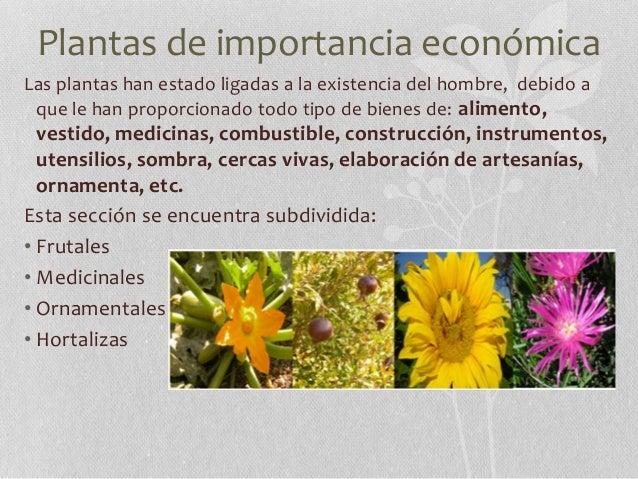 Jardin botanico buap y flor del bosque for Importancia de las plantas ornamentales