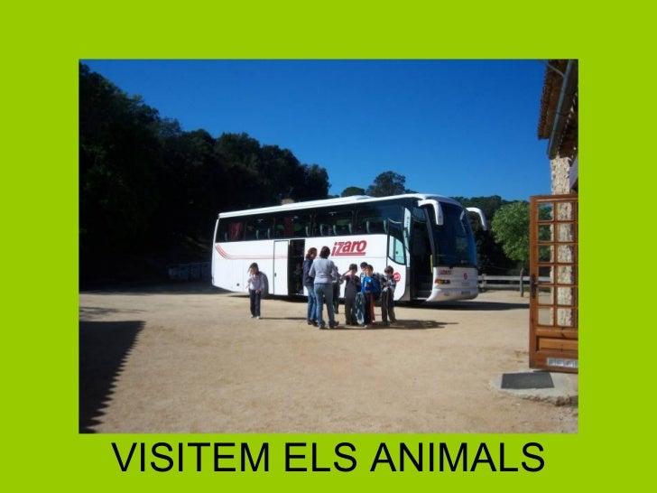 VISITEM ELS ANIMALS