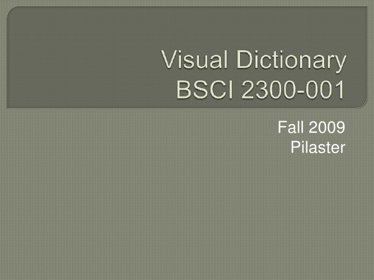 Visual DictionaryBSCI 2300-001 <br />Fall 2009<br />Pilaster<br />