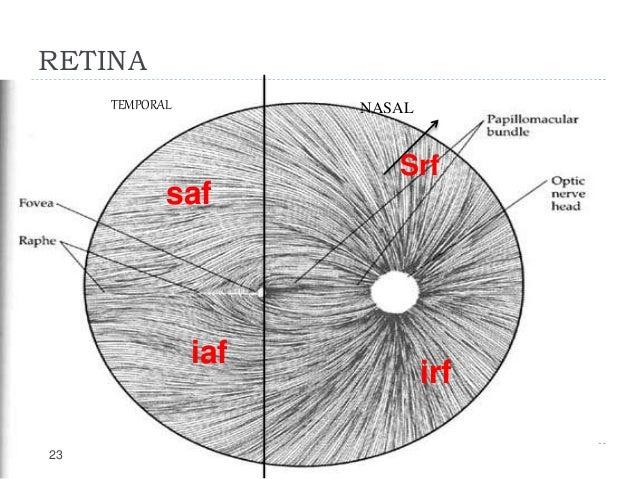 Internal capsule fibers