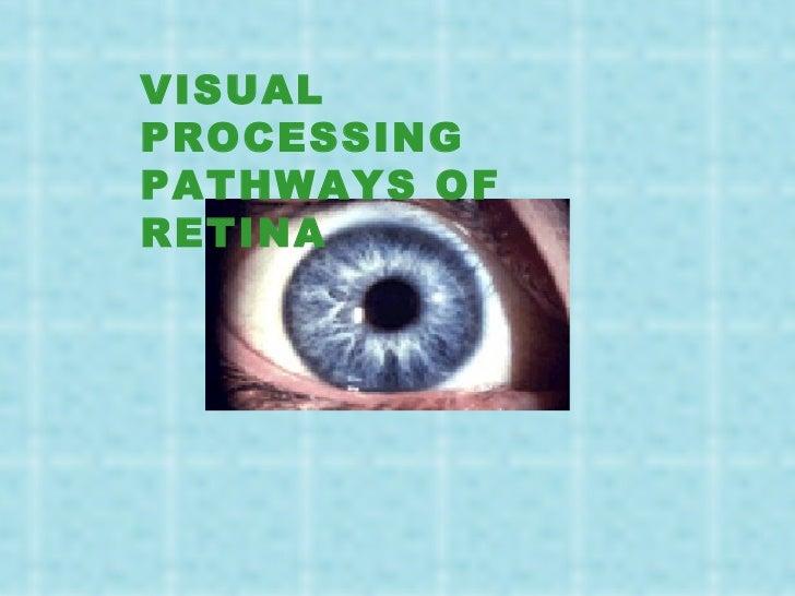 Visual processing in_vertebrate_retina