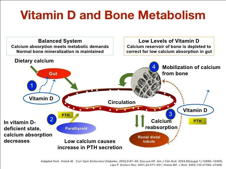 calcium metabolisme