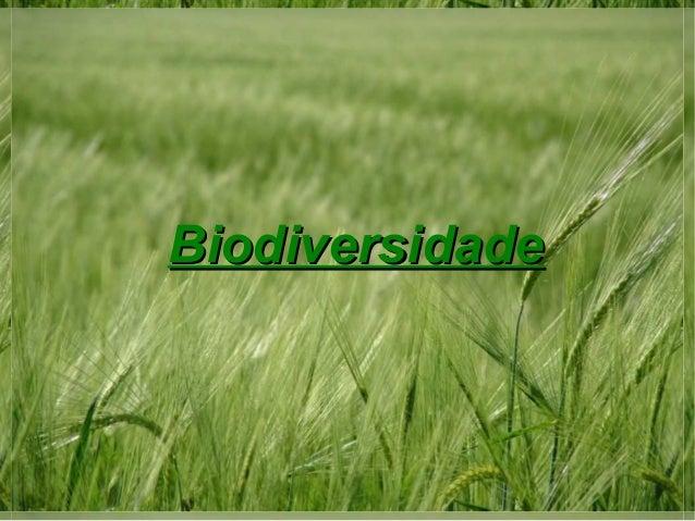 BiodiversidadeBiodiversidade