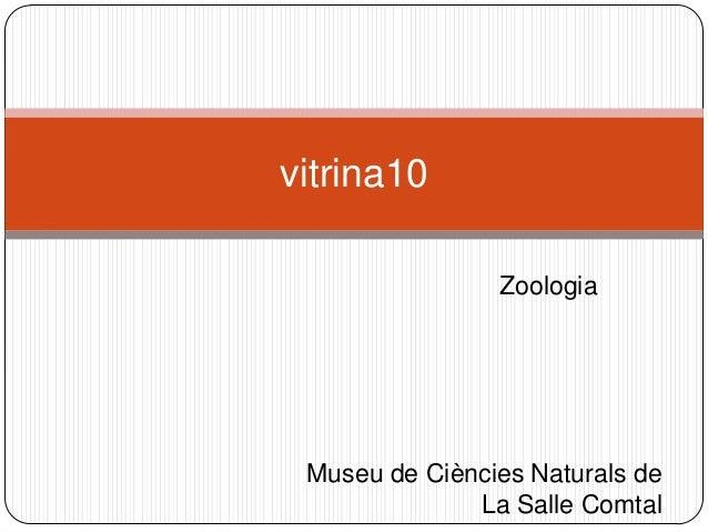 Zoologia vitrina10 Museu de Ciències Naturals de La Salle Comtal
