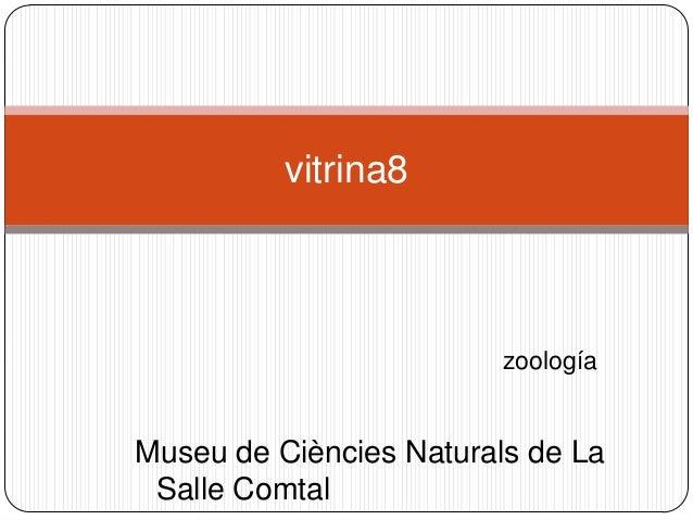 zoología vitrina8 Museu de Ciències Naturals de La Salle Comtal