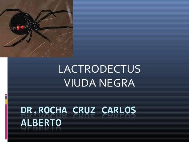 LACTRODECTUS VIUDA NEGRA
