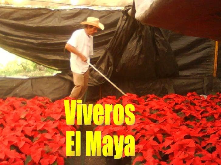 Viveros El Maya