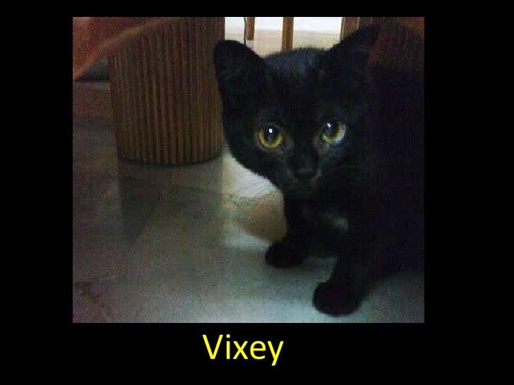 Vixey, the adorable black cat