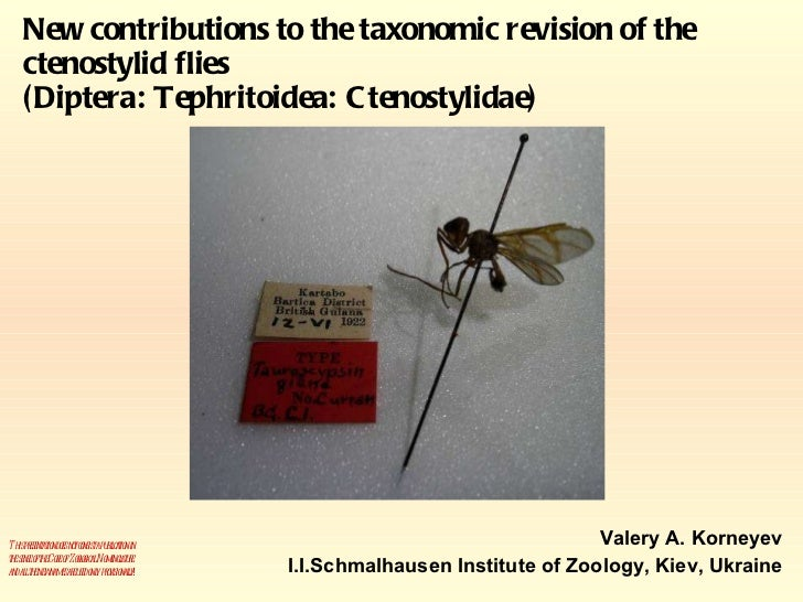 New contributions to the taxonomic revision of the ctenostylid flies (Diptera: Tephritoidea: Ctenostylidae) Valery A. Korn...