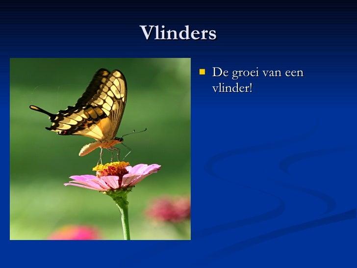 Vlinders <ul><li>De groei van een vlinder! </li></ul>
