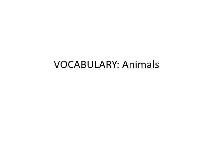 Vocabulary animals