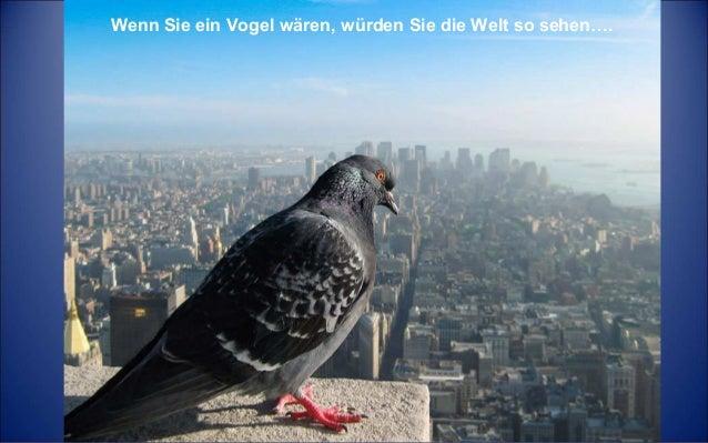 Wenn Sie ein Vogel wären, würden Sie die Welt so sehen….
