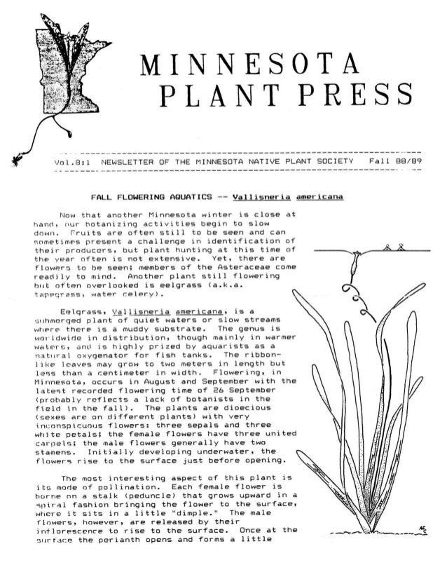 Fall 1988 Minnesota Plant Press