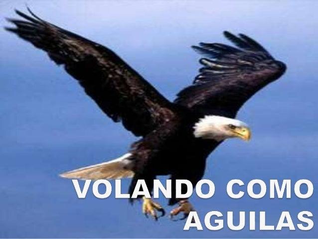 foto aguilas volando: