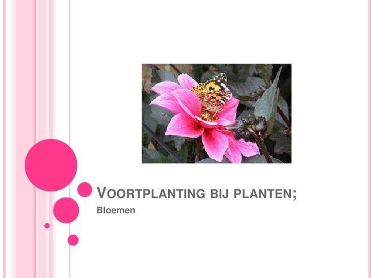Voortplanting bij planten;<br />Bloemen<br />